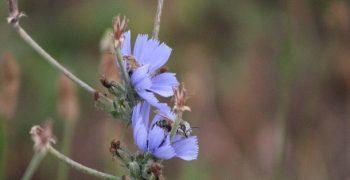 Etude D'impact Et Diagnostic Environnemental Faune – Flore – Zones Humides